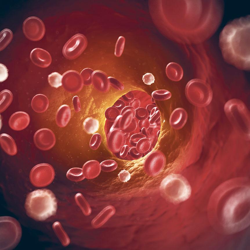 Grafische Darstellung von Blutplättchen in Gefäßen. Thema: Herzklappenfehler