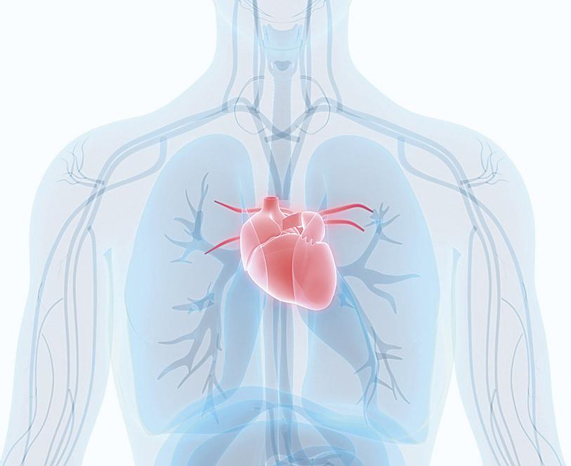 Schematische Darstellung: Herz