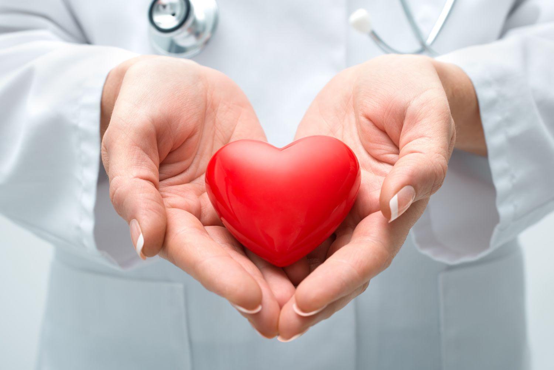 Mediziner hält unechtes Herz in den Händen. Thema: Herzschwäche