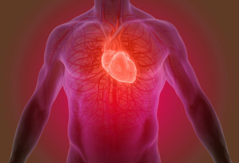 Herz mit seiner Vernetzung im Körper. Thema: Herzgesundheit