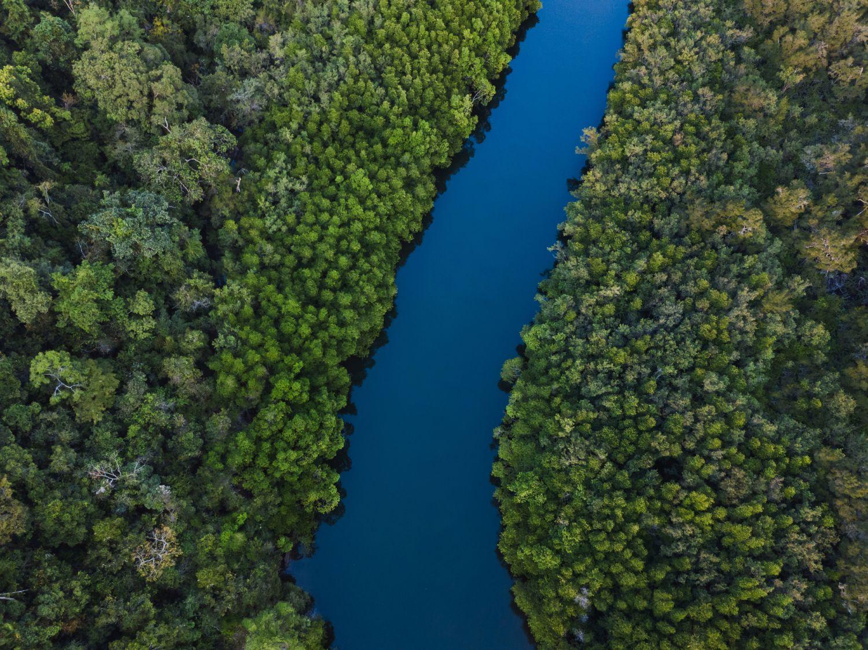 Luftaufnahme von einem Fluss durch den Wald. Symbolisiert den freien Bluttransport