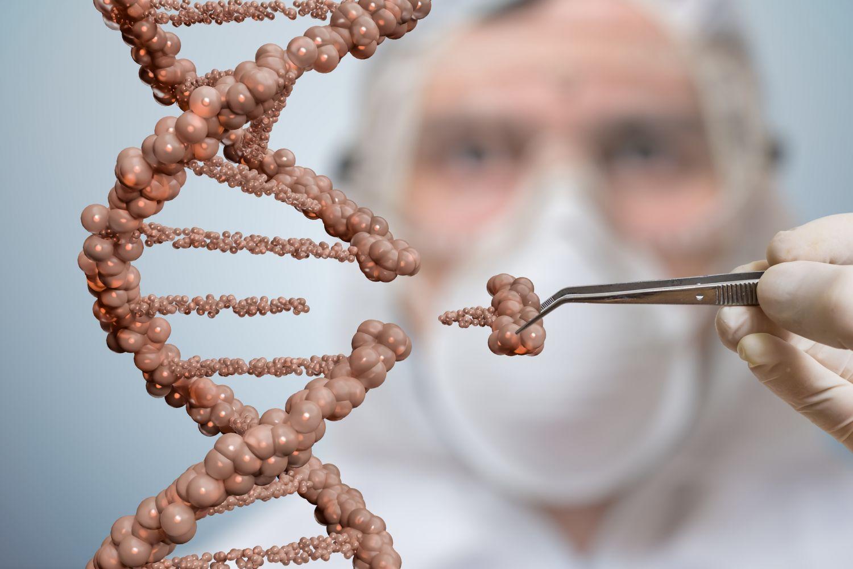 Ein Wissenschaftler ergänzt das Modell eines Genoms. Thema Herzinsuffizienz